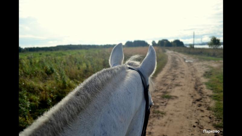 Осень. Прогулка на лошади. ЧШВЕПарково. 2017г.
