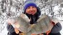 ШОК КИЛОГРАММОВЫЕ ОКУНИ ПОД ДЕРЕВОМ Вот это рыбалка