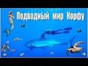 Подводный мир Корфу (трейлер фильма об острове) | The underwater world of Corfu (trailer)