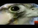DNA Feat Suzanne Vega - Toms Diner