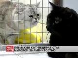 Кот-медбрат