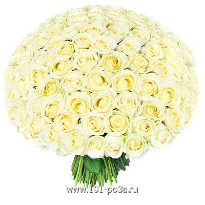 фото красивые белые цветы: