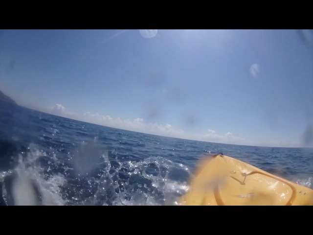 Black Marlin Takes Kayaker For A Ride