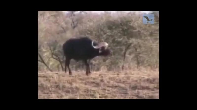 Триллер в мире животных