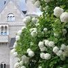 Свадебные апартаменты Мраморный Замок