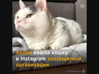 Девушка спасла кошку из приюта