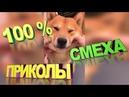 ПРИКОЛЫ с животными БЕЗ МАТОВ ПРИКОЛЫ с собаками ПОДБОРКА РЖАЧ Угар BEST видео