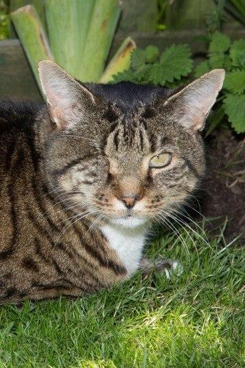 20-летний кот Нельсон