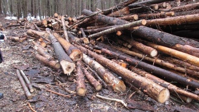 Три чёрных лесоруба вырубили лес на 3,2 млн рублей