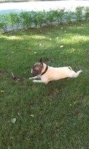 Пропала собака Мариуполь