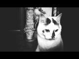 Noir Cats