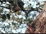 Валерий Золотухин Ходят кони из фильма Бумбараш1971