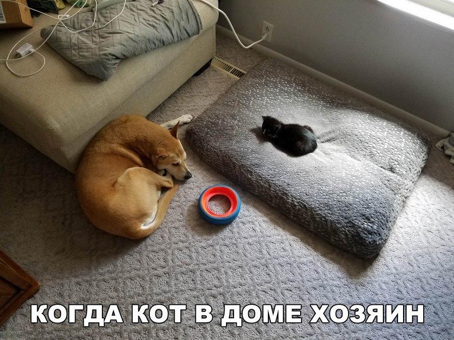 Котоматрица -2  - Страница 5 MaTuglrrxcU