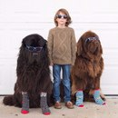 Фотограф Сташа Бекер несколько лет снимала дружбу своего сына Джулиана с двумя домашними н…