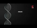 Tuhaf İcatlar Golf Arabaları DNA