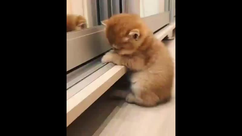 LlovecatsomuchBu_k8a2n6QQ.mp4