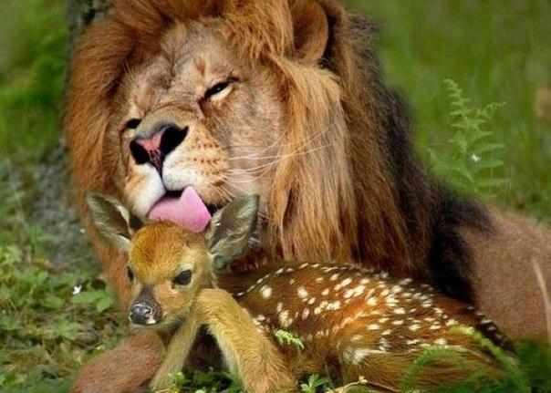 Занимательные истории о животных ,фото... - Страница 6 BtKdal2dQFc