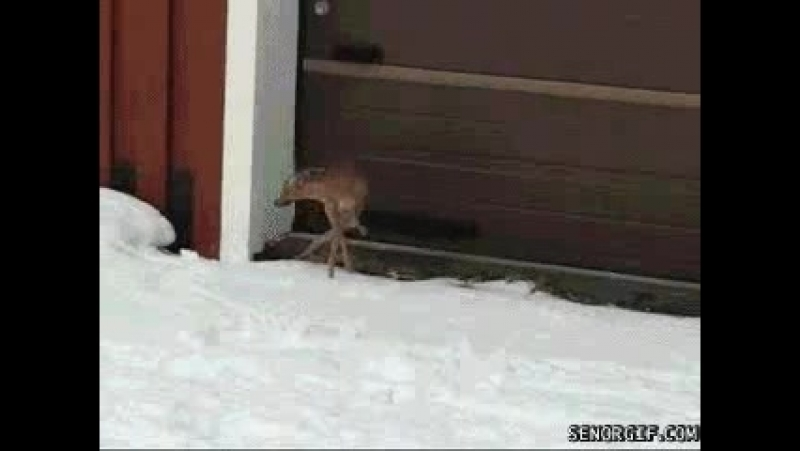 Brrrr, thats cold. Ill spare myself two paws