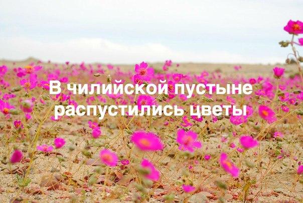 Вот такая красота!! #flower_travel