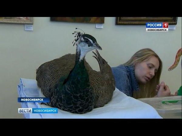 Вести Новосибирск