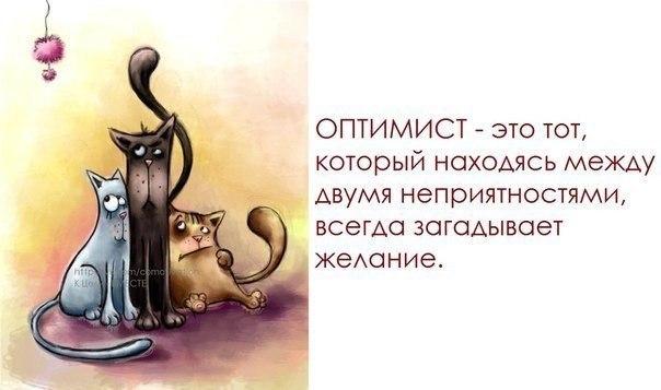 http://cs14108.vk.me/c421117/v421117684/66b3/FgbL7GR0cyA.jpg