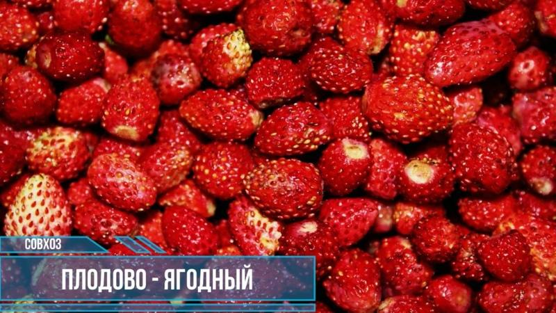 МЕРКЕ | КАЗАХСТАН | ПЛОДОВО ЯГОДНЫЙ СОВХОЗ | АУЭЗОВА , ЕСЕНИНА