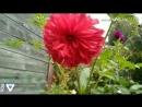 Цветы на моей дачи