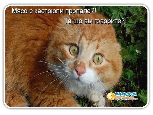http://cs417616.vk.me/v417616419/3a77/X0HXyr-I1DA.jpg