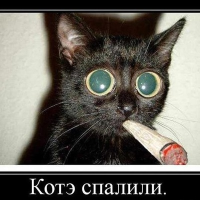 Кирилл Нестеренко, 7 ноября , Феодосия, id177387620