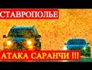 Последние новости России Ставрополье нашествие Саранчи