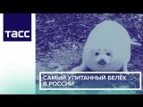 Самый упитанный белек в России