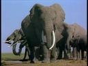 Слоненок Эбу