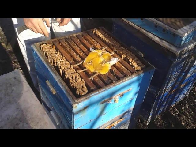 Как поготовить пчел к зимовке на улице - уроки пчеловодства
