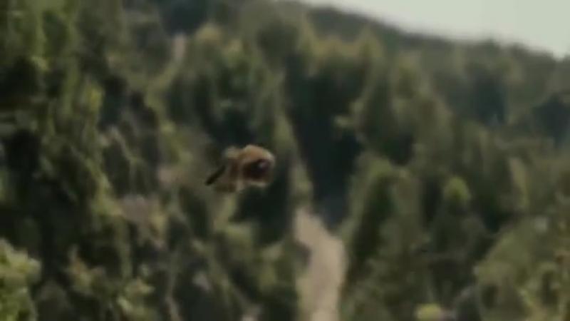 Натуральный полет матки и трутней, облет.