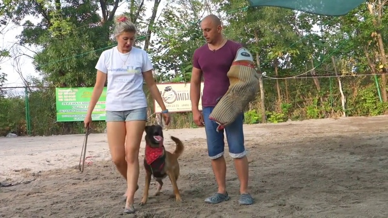 Дрессировка Бельгийской овчарки Малинуа. Training of the Belgian Shepherd Dog Malinois.