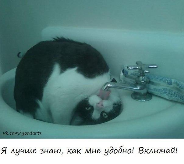 http://cs419631.userapi.com/v419631678/4640/CerrpivV62Y.jpg