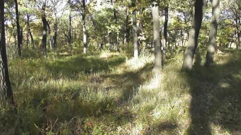 Вырубка уникальной дубовой рощи в лесопарке Энгельса. Власти бездействуют. Саратов