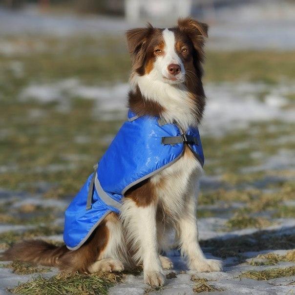 OSSO Fashion - лучшие товары для животных,дрессировки,спорта YXJyZwWzmCM
