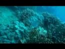 В глубинах морей и океанов, существует свой, не сравнимый ни с чем , удивительный, и не похожий на тот, что окружает нас с вами