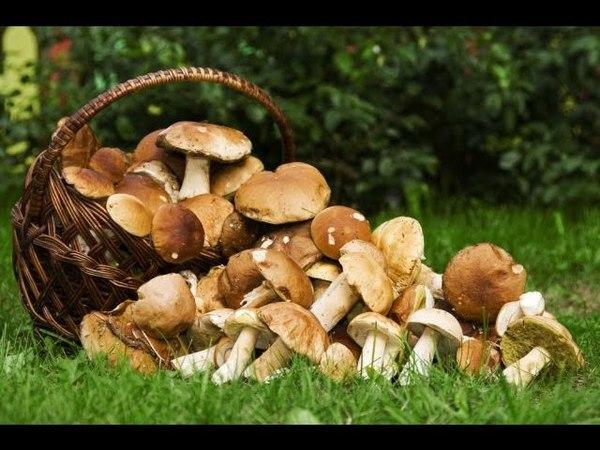 Охренеть грибов в конце августа!