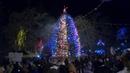 В городском саду в предверии нового года состоялось открытие главной Шадринской елки