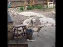 У собаки умер хозяин, но её не оставили одну 6 sec