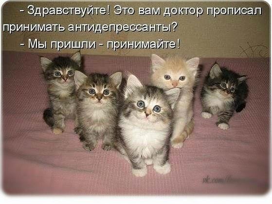Кошечки..Кошарики)) - Страница 3 SLFEihBk8cI