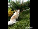 Любимая наша собака Дружок 😉