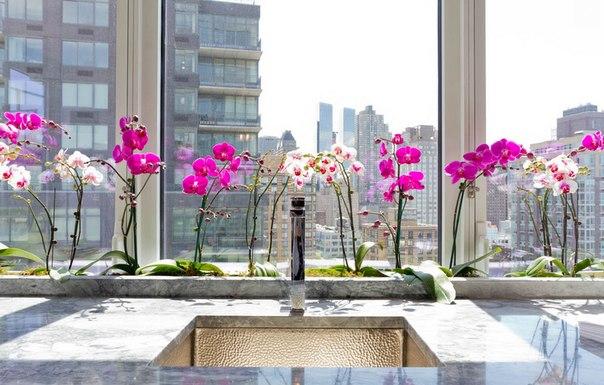 Цветущий сад: 7 растений, идеальных для дома Растения не только улучшают качество воздуха в помещении, они делают нас более работоспособными и устойчивыми к стрессу. Мы расскажем, какие растения выбрать для дома и как за ними ухаживать