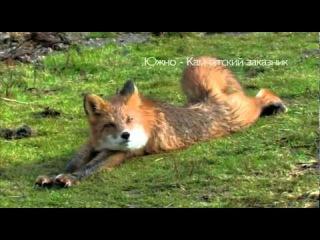 кот и лиса. Знакомство. (Полная версия) cat and fox. Meeting