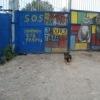 """Притулок для тварин у Пирогово """"SOS"""""""