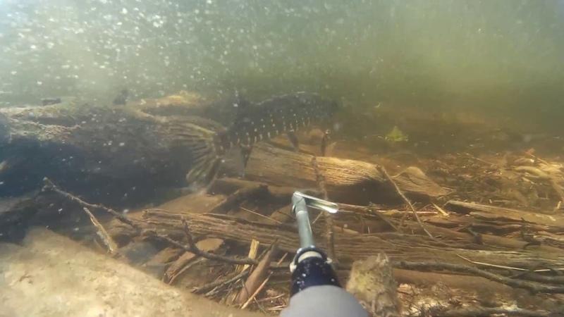 Подводная охота Новый рекорд