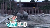 Man Jumps into Elephant Enclosure ViralHog
