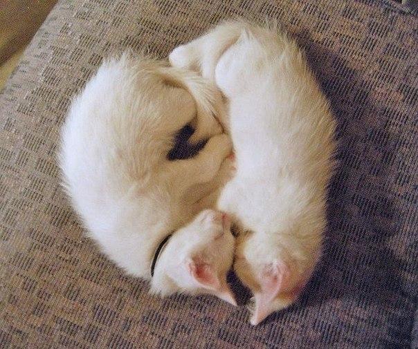 Кошки и прочие забавные животные  - Страница 3 ZsEBm4UE8vQ